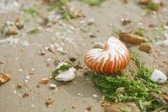 Brits de zomerstrand met overzeese van nautiluspompilius shell Royalty-vrije Stock Foto's