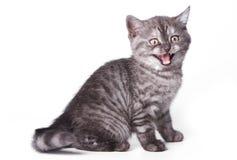 Brits katje stock afbeelding
