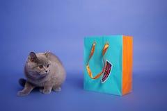 Brits katje Shorthair Royalty-vrije Stock Foto's