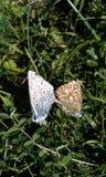 Britse wilde vlinders Stock Foto's