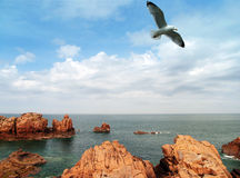 Brittany island of bréhat. Seagull  on bréhat island, brittany Stock Photography