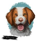 Brittany puppy dog breed isolated on white digital art illustration. Brittany puppy dog breed isolated on white background. French pet domestic animal bred as Vector Illustration