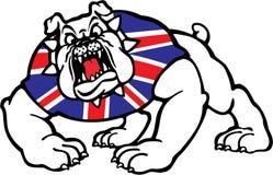 brittisk bulldogg Royaltyfri Fotografi