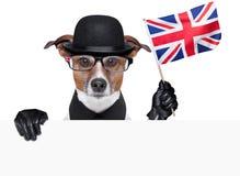 Brittisk hund Arkivbilder