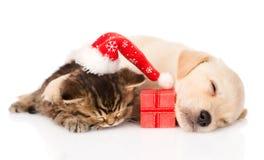Brittisk katt för golden retrievervalpdogand med den santa hatten och gåvan isolerat Fotografering för Bildbyråer