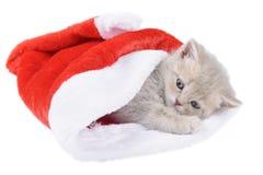 Brittisk katt i en röda Santa& x27; s-lock på vit bakgrund Arkivbilder