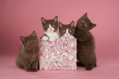 Brittisk kattunge för shorthair fyra i en ask Royaltyfri Bild