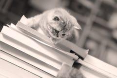 Brittisk Shorthair kattunge och böcker Royaltyfri Bild