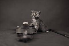 Brittisk Shorthair kattunge och en fiol Royaltyfria Foton