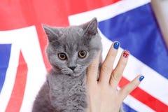 Brittisk Shorthairkitten och Union Jack flagga Royaltyfria Foton