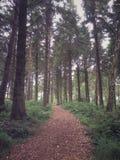 Brittisk skogsmark Fotografering för Bildbyråer