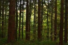 Brittisk skogsmark Royaltyfri Fotografi