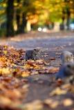 Brittiska Shorthair kattungar bland höstsidor Arkivbilder
