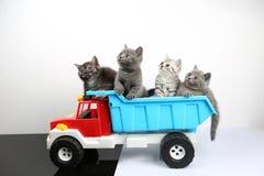 Brittiska Shorthair kattungar i en lastbil Royaltyfria Bilder