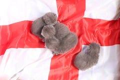 Brittiska Shorthair kattungar och England flagga Arkivfoton