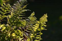 Brittiska trädgårdar Royaltyfria Foton