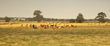 Brittiskt jordbruk. Royaltyfri Bild
