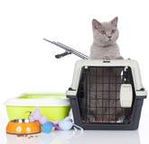 Brittiskt kattsammanträde för kort hår i en transportask Royaltyfri Fotografi
