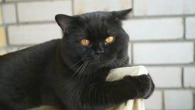 Brittiskt sammanträde för svart katt på balkongen arkivfilmer