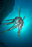 Brittle Star against the sun Stock Photo