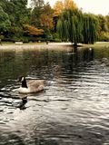 Brittträdgård Royaltyfri Foto