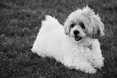 Brividi del cucciolo Fotografia Stock Libera da Diritti