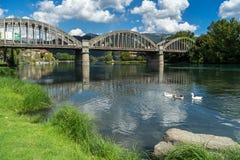 BRIVIO, ИТАЛИЯ ЕВРОПА - 18-ОЕ СЕНТЯБРЯ: Гусыни на реке Adda на Стоковые Изображения