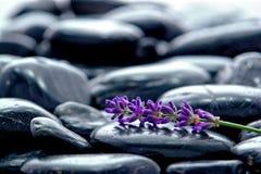 Brizna de la flor de la lavanda en la cama de piedras Imágenes de archivo libres de regalías
