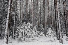 börjande vinter Arkivbilder