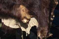 Bärn-Fell Lizenzfreie Stockfotos