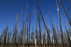 brända trees Arkivbild
