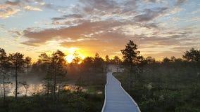 Brännhet soluppgång i myren Royaltyfri Foto