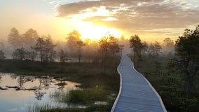 Brännhet soluppgång i myren Fotografering för Bildbyråer