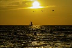 Bränning sol, seglar & pelikan Arkivfoto