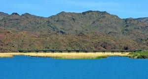Bro över Bill Williams River - Arizona Royaltyfria Foton