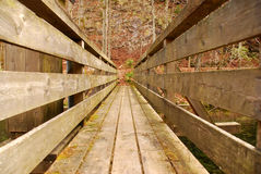 Bro över en flod i en skog Arkivbilder