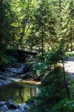 Bro över en skogflod Royaltyfri Foto