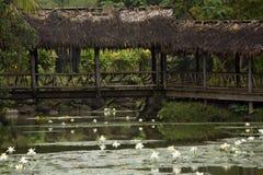 Bro över ett damm, Fiji royaltyfri foto