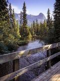 Bro över liten vik i mitt av skogen med berget i bakgrunden i Canmore Alberta Canada royaltyfria foton