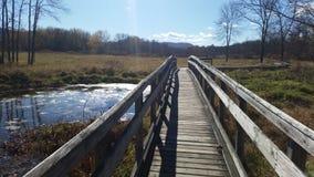 bro över swamp Royaltyfri Foto