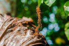 Bro av myror Arkivbild