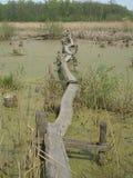 Bro av plankor Arkivbild