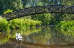 Bro av svanar arkivfoto