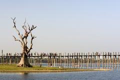 Bro för U Bein i Amarapura i Myanmar Arkivbild