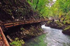 Bro i den Vintgar kanjonen Royaltyfri Fotografi