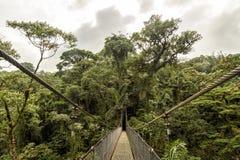 Bro i djungeln Royaltyfri Bild