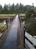 Bro i mitt av naturen royaltyfria bilder