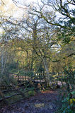 Bro i 100 tunnland trä Royaltyfria Foton