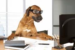 Büro Manager Lizenzfreie Stockfotografie