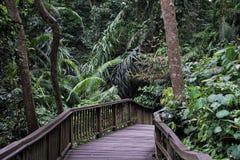 Bro med gröna växter och träd i den Bali djungeln Indonesien Royaltyfria Bilder